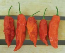 SEEDS EXTREME HEAT!!! 40X GHOST PEPPER CHILI Chilli Bhut Jolokia