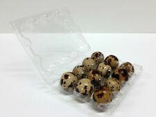 Quail Egg Cartons - 100pcs