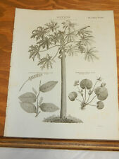 1817 Print/TYPES OF CLASS 22 DIOECIA PLANTS//PAPAW TREE, CHINESE LAUREL,FROG-BIT