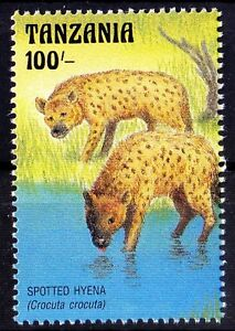 Spotted Hyena, Wild Life Animals at Watering Hole in Tanzania 1993 MNH