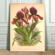 """JEAN LINDEN - Beautiful Purple Orchid #44 - CANVAS PRINT POSTER - 12x8"""""""