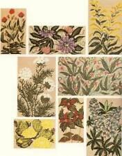 Wildflower Designs for Needlework - 29 charts & watercolors -  Adalee Winter PB