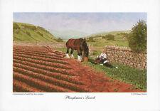 BORDER FINE ARTS - PLOUGHMAN'S LUNCH - clydesdale horse collie farm nature PRINT