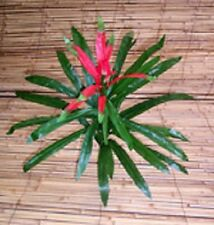 Artificial flowers & plants silk Dracena Plant  P25 - SPECIAL CLEARANCE PRICE!!
