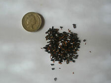 Eucalyptus citron-scented gum, eucalyptus citron, eucalyptus citriodora 25 graines