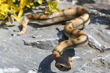 Gartenfigur Schlange Teichfigur Gartendeko Teichdeko Tier Reptil Lebensecht