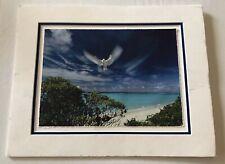 Paul McCormick Digital Photographic Print - Hawaiian Dove - Peace on Earth