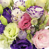 15+ LISIANTHUS EUSTOMA ECHO MIX, DOUBLE FLOWER ANNUAL, LONG BLOOM FLOWER SEEDS