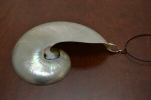 """WHITE MOTHER OF PEARL NAUTILUS SHELL PENDANT 4"""" - 5""""  #T-18"""