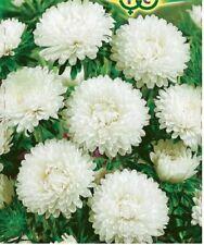 Aster Royal Snow Pearls Seeds 0,3g annual flower ��тра Снежный жемчуг S0296
