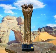 More details for fossilised bison leg bone on stand - ice age fossil uk pleistocene ✔100% genuine
