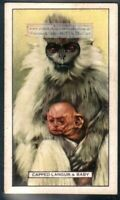 Capped Langur c80 Y/O Trade Ad Card