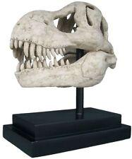 NE100502 -T-Rex Dinosaur Skull Fossil Statue on Museum Mount- New!