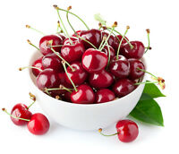 30 Sweet Cherry Seeds Mazzard Cherry Prunus Avium Heirloom Organic S022