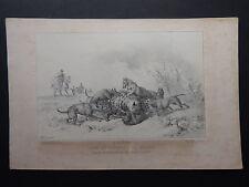 Gravure CHASSE Une Saint-Hubert à La Macta HALLALI DE HYÈNE 1846 Grenier ALGÉRIE