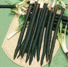 Seeds Salsify Medical Black Root Vegetable Organic Heirloom Russian Ukraine
