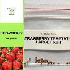 Strawberry 'Temptation'-EDIBLES-25 seeds-Base Chakra