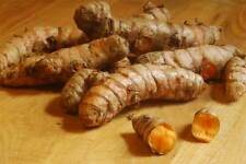 8 Organic Turmeric Roots Root ,Whole,Raw   Juice it,brew it or plant it.