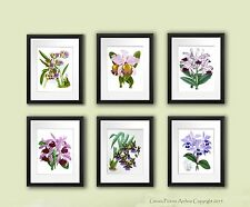 Orchids Botanical Prints Set of 6 Unframed Tropical Flower wall art gift for her