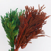 Dried Natural Flower Lycopodium Pine Plant Bunch Bouquet Wedding Home Decoration