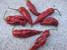 Bhut Jolokia Caramel 10 Samen Chilisamen - ULTRA SCHARF - RAR