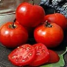 Crimson Sprinter Tomato Heirloom 25 Seeds Moon Gardens Simply Grown Beautifully