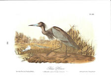 Blue Heron Vintage Bird Print by John James Audubon ABONA#380