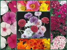 Farm Mix Favorites Special, 5 Full Size Packs, Heirloom Flower Seeds, Colorful!