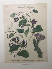 FINE ART LITHOGRAPH: 1838 Botanica Magazine Reprint 20 x 14 Trumpet Vine
