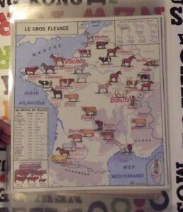 Affiche Set de Table Poster France Gros Élevage Boeufs Quercy Salers pur-sang