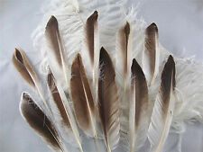 "12 pcs.4-7"" Natural Brown & White Duck Wing Pointer Feathers-US Seller"