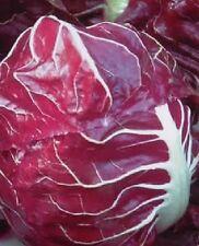 Organic Vegetable - Chicory - Rossa di Verona Dragon - 800 Seeds