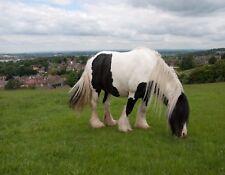 METAL REFRIGERATOR MAGNET Gypsy Vanner aka Irish Cob Horse Travel England