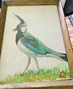 Bird Water Colour Original
