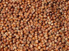 5 KG Haselnüsse in der Schale Frankreich Feinschmecker 20-22mm Ernte 2020