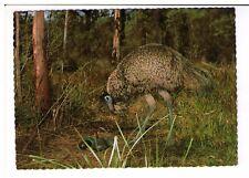 Postcard: Emu and Nest of Eggs - Australia
