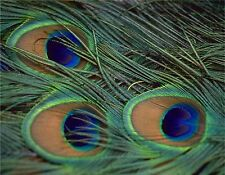 PEACOCK FEATHERS #1  MOUSE PAD  IMAGE FABRIC TOP RUBBER BACKED