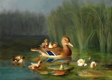 Oil painting Franz Böe - Wild Duck with its Ducklings in lotus pond with flowers