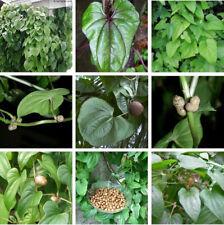 Dioscorea Batatas 5 PCS Seeds Plants Bean Vegetable Opposita Thunb Chinese Yam I
