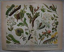 Original Grafiken & Drucke mit Zoologie-Motiv und Lithographie-Technik