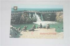 Animals Collectable Real Photo Postcards