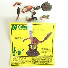 Dinotales Dinosaur Miniature Figure Ovilaptor Kaiyodo C.C. Saurus B07