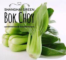 RARE✿ 200+ AUTHENTIC Shanghai Green Stem Bok Choy/ Pak Choi Seeds