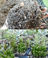 Succulent Cactus Potting Soil 5 CUPS-6 GALLON Fast Draining Wicking Mycorrhizae