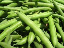 White Half Runner Mountaineer Bean Seeds - 13 grams