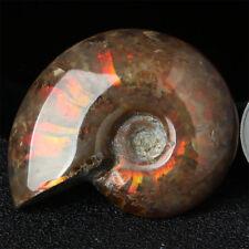 Natürliche irisierende Ammonit Ammolite Flash Facettenprobe Fossil Madagaskar
