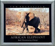Wildlife African Elephant Safari Wall Decor Animal Wall Decor Framed Art Picture