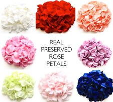 Rose petal Wedding confetti / decoration. Preserved rose petals, many colours