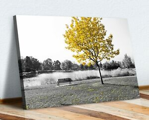 Yellow Tree Leaves Bench Black White Canvas Wall Art Picture Print 30mm Deep