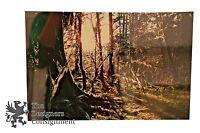 Pencil Signed David Malcolm Scott Woods Sunshine Framed Original Photograph